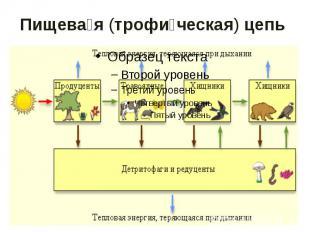 Пищевая (трофическая) цепь