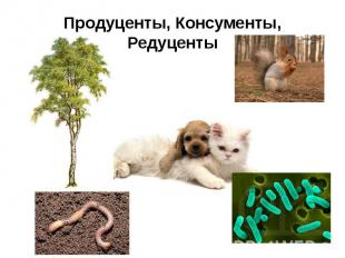 Продуценты, Консументы, Редуценты