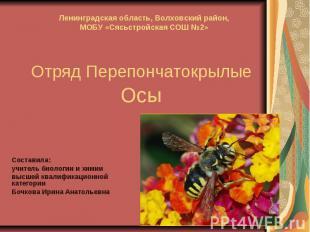 Отряд Перепончатокрылые ОсыСоставила:учитель биологии и химиивысшей квалификацио