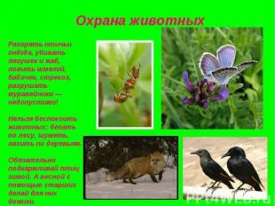 Разорять птичьи гнёзда, убивать лягушек и жаб, ловить шмелей, бабочек, стрекоз,