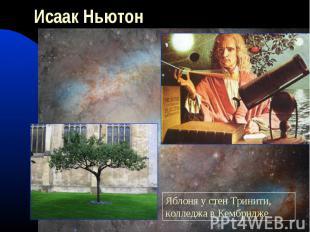 Исаак НьютонЯблоня у стен Тринити, колледжа в Кембридже