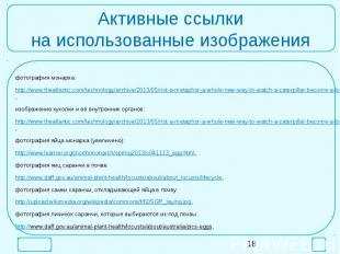 Активные ссылкина использованные изображенияфотография монарха:http://www.theatl