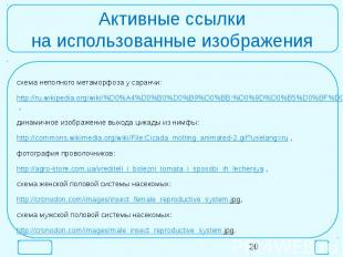 Активные ссылкина использованные изображениясхема неполного метаморфоза у саранч