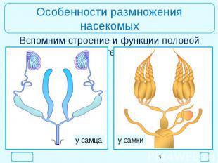 Особенности размножения насекомыхВспомним строение и функции половой системы