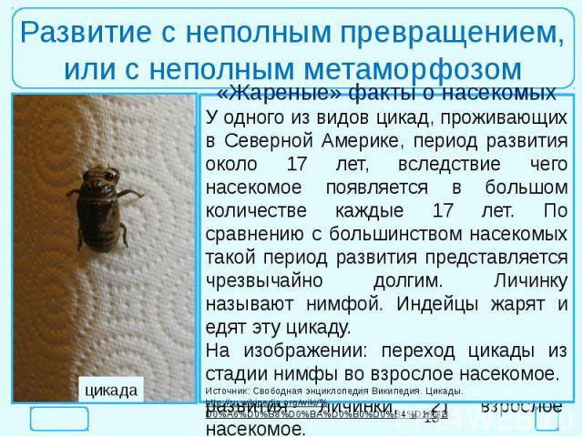 Развитие с неполным превращением,или с неполным метаморфозом«Жареные» факты о насекомыхУ одного из видов цикад, проживающих в Северной Америке, период развития около 17 лет, вследствие чего насекомое появляется в большом количестве каждые 17 лет. По…