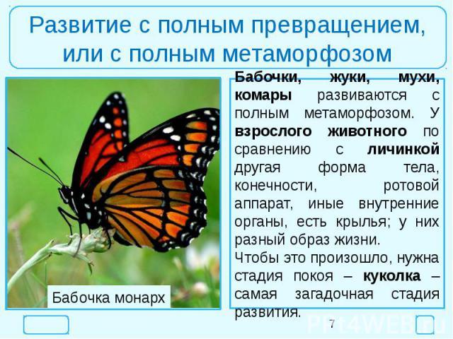 Развитие с полным превращением,или с полным метаморфозомБабочки, жуки, мухи, комары развиваются с полным метаморфозом. У взрослого животного по сравнению с личинкой другая форма тела, конечности, ротовой аппарат, иные внутренние органы, есть крылья;…