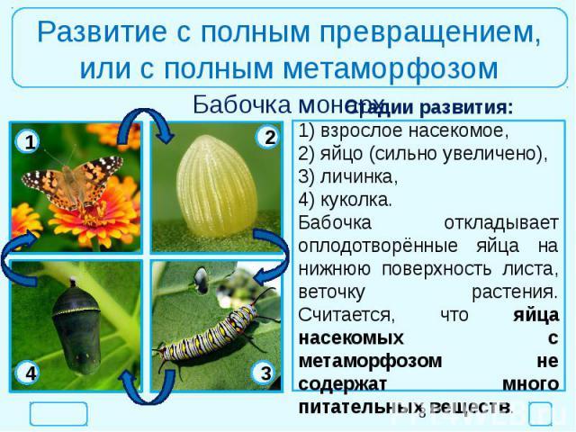 Развитие с полным превращением,или с полным метаморфозомСтадии развития:1) взрослое насекомое,2) яйцо (сильно увеличено),3) личинка,4) куколка.Бабочка откладывает оплодотворённые яйца на нижнюю поверхность листа, веточку растения. Считается, что яйц…