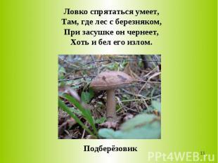 Ловко спрятаться умеет,Там, где лес с березняком,При засушке он чернеет,Хоть и б