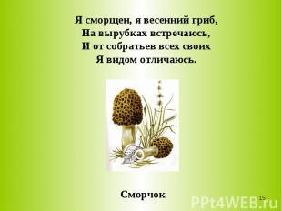 Я сморщен, я весенний гриб,На вырубках встречаюсь,И от собратьев всех своихЯ вид