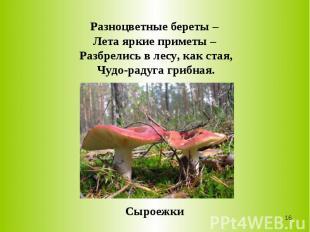 Разноцветные береты – Лета яркие приметы – Разбрелись в лесу, как стая,Чудо-раду
