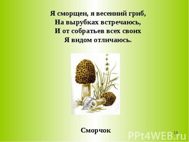 Я сморщен, я весенний гриб,На вырубках встречаюсь,И от собратьев всех своихЯ видом отличаюсь.