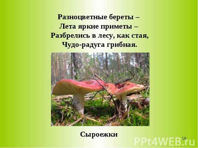 Разноцветные береты – Лета яркие приметы – Разбрелись в лесу, как стая,Чудо-радуга грибная.