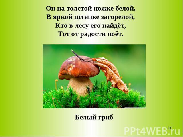 Он на толстой ножке белой,В яркой шляпке загорелой,Кто в лесу его найдёт,Тот от радости поёт.Белый гриб