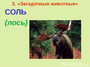 3. «Загадочные животные»СОЛЬ (лось)