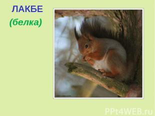 ЛАКБЕ (белка)