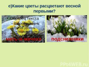 е)Какие цветы расцветают весной первыми?