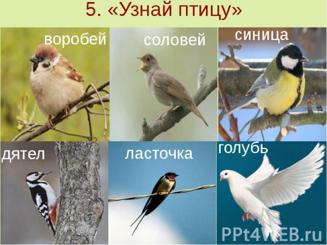 5. «Узнай птицу»