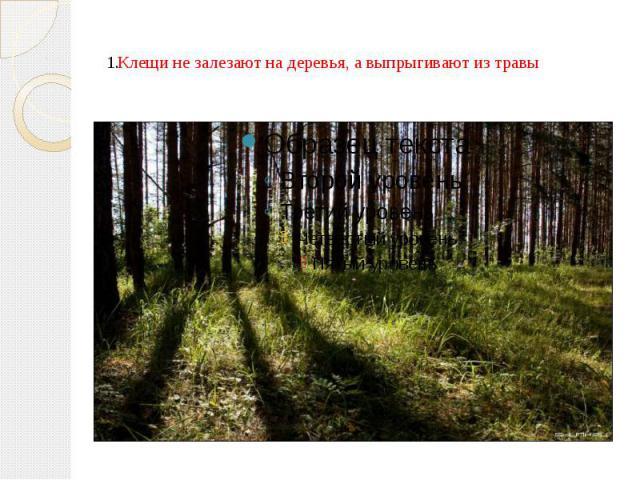 Клещи не залезают на деревья, а выпрыгивают из травы