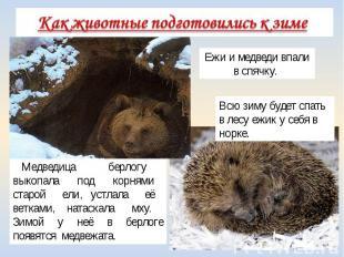 Медведица берлогу выкопала под корнями старой ели, устлала её ветками, натаскала