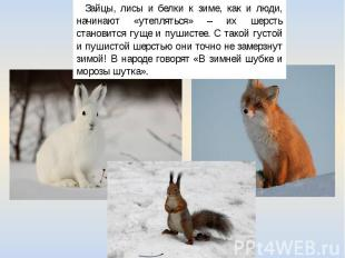 Зайцы, лисы и белки к зиме, как и люди, начинают «утепляться» – их шерсть станов