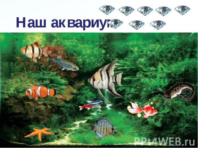 Наш аквариум