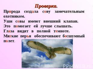 Проверка. Природа создала сову замечательным охотником. Уши совы имеют внешний к
