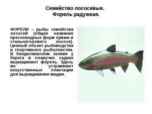 Семейство лососевые. Форель радужная.ФОРЕЛИ – рыбы семейства лососей (общее назв