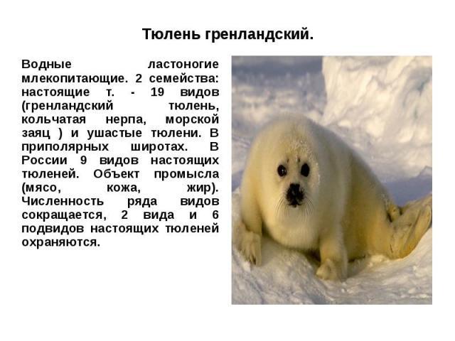 Тюлень гренландский.Водные ластоногие млекопитающие. 2 семейства: настоящие т. - 19 видов (гренландский тюлень, кольчатая нерпа, морской заяц ) и ушастые тюлени. В приполярных широтах. В России 9 видов настоящих тюленей. Объект промысла (мясо, кожа,…