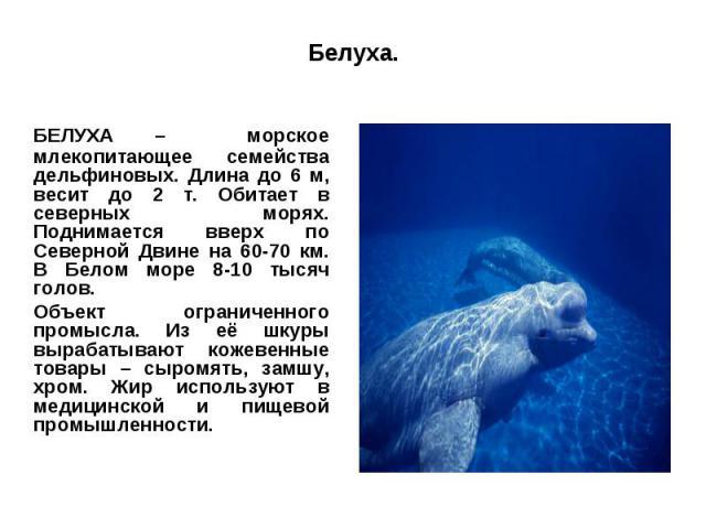 Белуха.БЕЛУХА – морское млекопитающее семейства дельфиновых. Длина до 6 м, весит до 2 т. Обитает в северных морях. Поднимается вверх по Северной Двине на 60-70 км. В Белом море 8-10 тысяч голов.Объект ограниченного промысла. Из её шкуры вырабатывают…