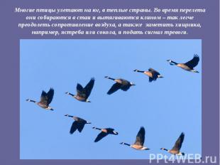 Многие птицы улетают на юг, в теплые страны. Во время перелета они собираются в