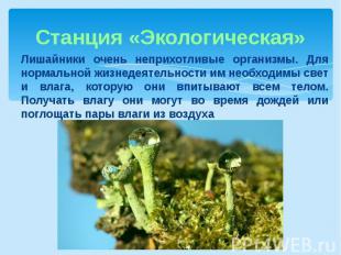 Станция «Экологическая»Лишайники очень неприхотливые организмы. Для нормальной ж