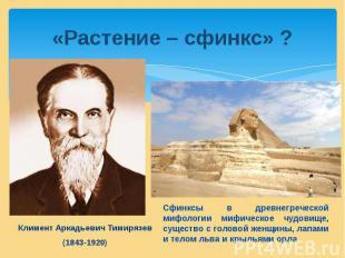 «Растение – сфинкс» ?Климент Аркадьевич Тимирязев (1843-1920)Сфинксы в древнегре