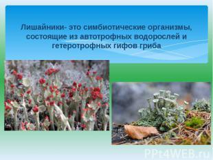 Лишайники- это симбиотические организмы, состоящие из автотрофных водорослей и г
