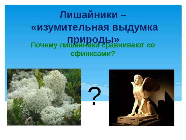 Лишайники – «изумительная выдумка природы»Почему лишайники сравнивают со сфинксами?