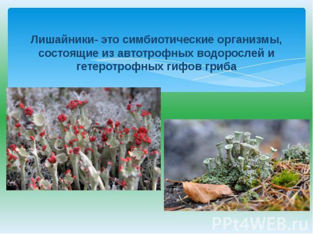 Лишайники- это симбиотические организмы, состоящие из автотрофных водорослей и гетеротрофных гифов гриба