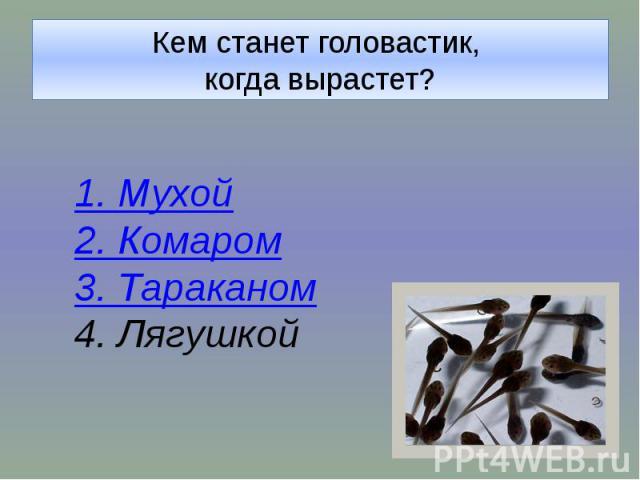 Кем станет головастик, когда вырастет?1. Мухой2. Комаром3. Тараканом4. Лягушкой