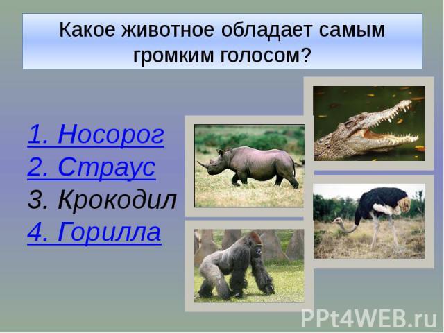Какое животное обладает самым громким голосом?1. Носорог2. Страус3. Крокодил4. Горилла