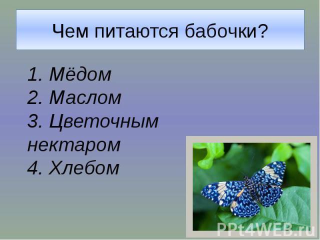 Чем питаются бабочки?1. Мёдом2. Маслом3. Цветочным нектаром4. Хлебом