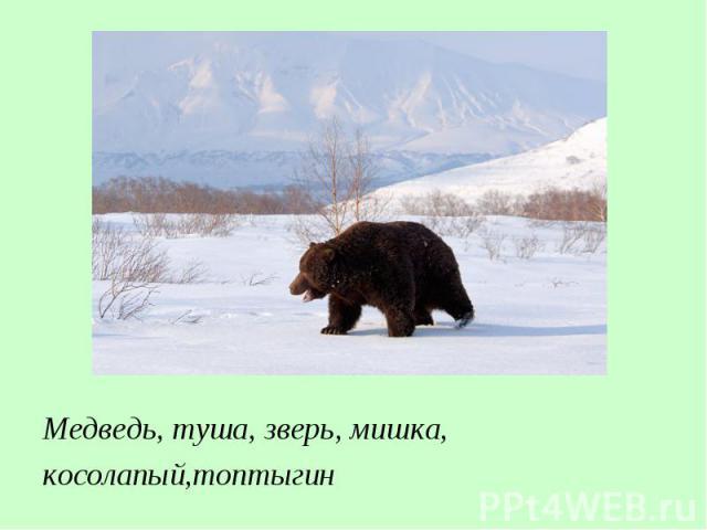 Медведь, туша, зверь, мишка, косолапый,топтыгин