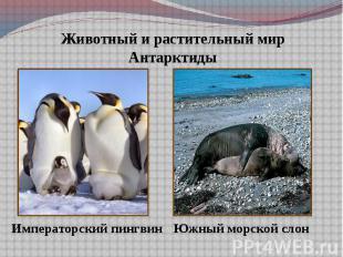 Животный и растительный мир Антарктиды