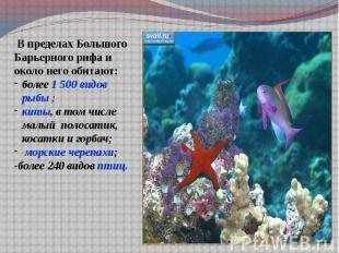 В пределах Большого Барьерного рифа и около него обитают:более 1 500 видов рыбы