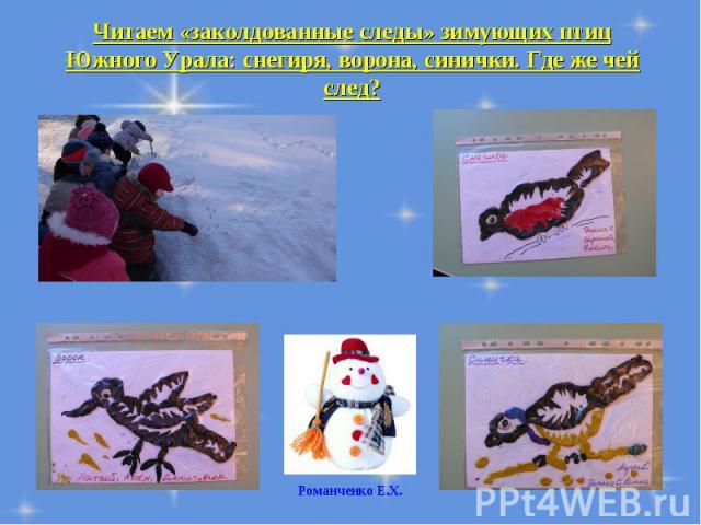 Читаем «заколдованные следы» зимующих птиц Южного Урала: снегиря, ворона, синички. Где же чей след?