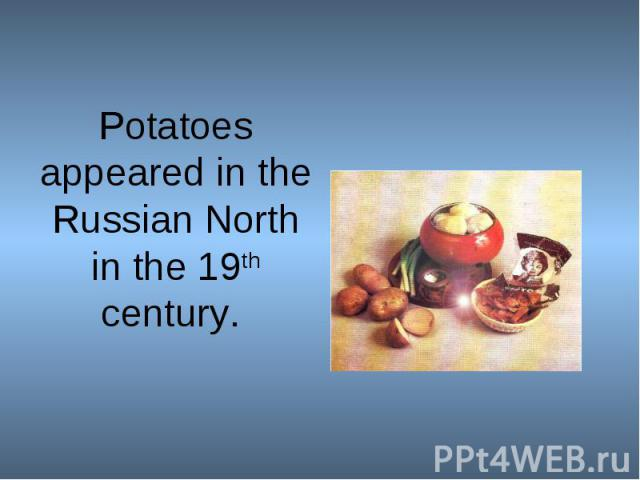 Potatoes appeared in the Russian North in the 19th century.