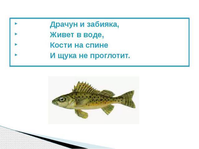 Драчун и забияка, Драчун и забияка, Живет в воде, Кости на спине И щука не проглотит.