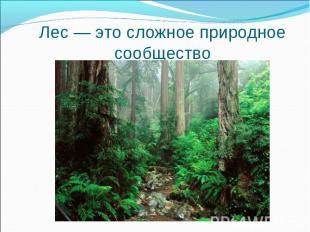 Лес — это сложное природное сообщество