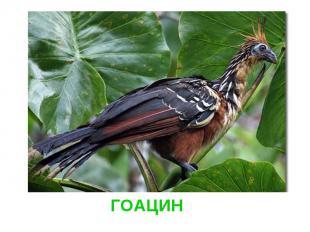 ГОАЦИН