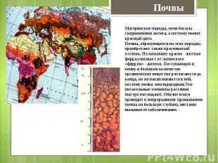 Материнские породы, почв богаты соединениями железа, а поэтому имеют красный цве