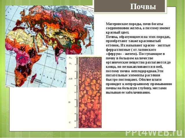 Материнские породы, почв богаты соединениями железа, а поэтому имеют красный цвет.Почвы, образующиеся на этих породах, приобретают также красноватый оттенок. Их называют красно - желтые ферраллитные ( от латинского «феррум» - железо). Поступающие в …