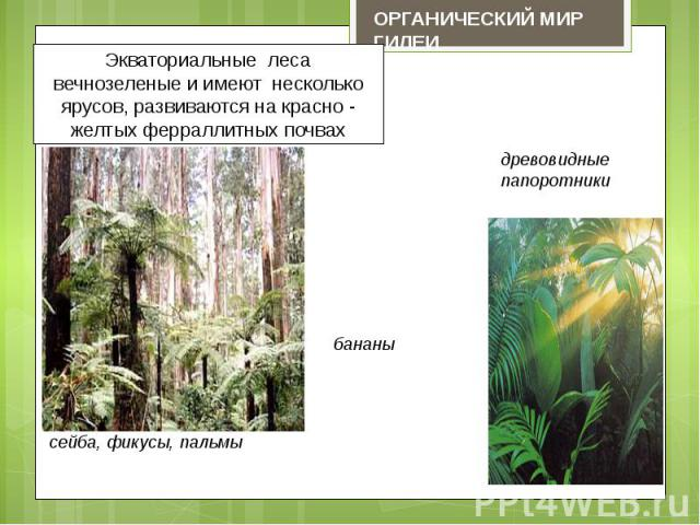 Экваториальные леса вечнозеленые и имеют несколько ярусов, развиваются на красно - желтых ферраллитных почвах