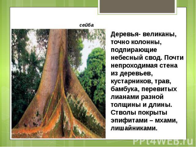 Деревья- великаны, точно колонны, подпирающие небесный свод. Почти непроходимая стена из деревьев, кустарников, трав, бамбука, перевитых лианами разной толщины и длины. Стволы покрыты эпифитами – мхами, лишайниками.